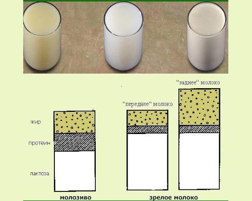 Как сделать грудное молоко жир